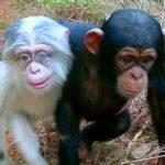 Феномен сотой обезьяны